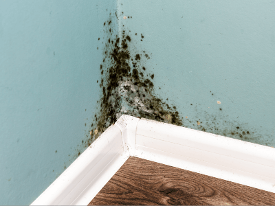 What Causes Mold