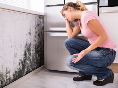 What Should I Know About Mold Inspections?